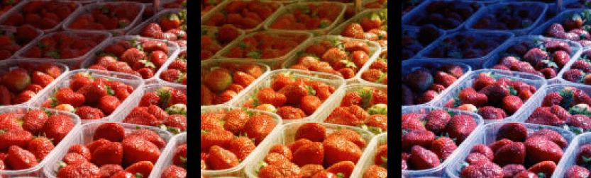 Die wahrgenommene Farbkonstanz wird an einem Foto von Erdbeeren mit unterschiedlichen Belichtungen deutlich